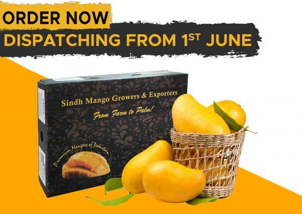 Sindhri Mango
